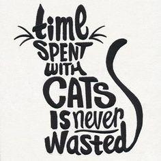 Ein Muss für jeden #diyforpets # Jedermann   – Cats – Katzen
