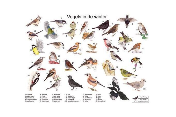 Zoekkaart Vogels in de winter