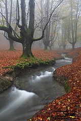 : This Time, Photos, Autumn Scene, Forests, Fall Beautiful, Trees, Places, Rivers, Natural