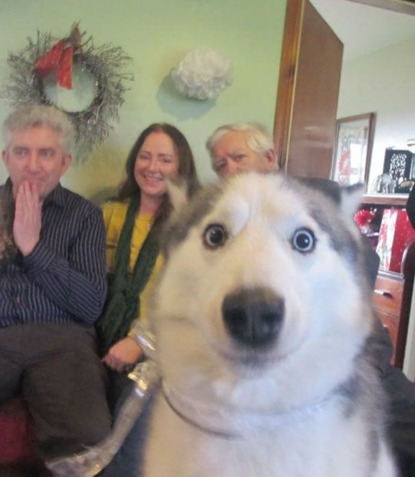 Best Animal Photobombs Selfies Images On Pinterest Selfies - 35 hilarious animal photobombs ever