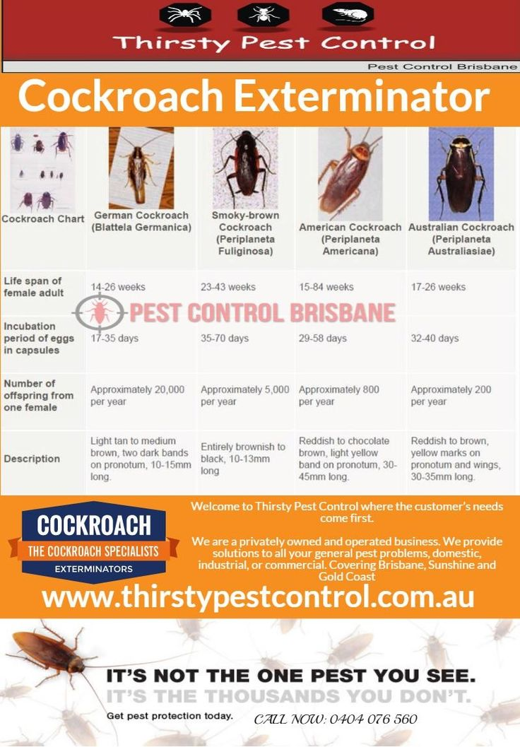 Thirsty Pest Control takes the time to ensure every job is evaluated properly. This enables us to provide you, the client, with a pest control service designed specifically for your property.   https://thirstypestcontrol.wordpress.com/2016/04/24/cockroach-exterminator-of-thirsty-pest-control/