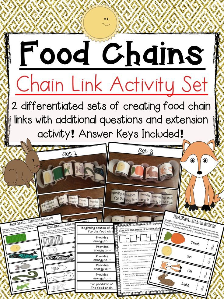 food chain links activity set hands on life science food chain activities science lessons. Black Bedroom Furniture Sets. Home Design Ideas