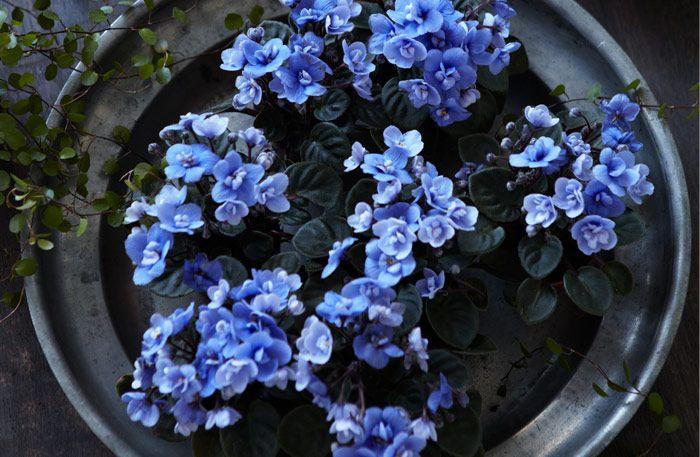 Blått och grått är en perfekt kombination. Tenn och plåt får blåa blommor att lysa starkare. Samtidigt ger blomfärgen den svala, grå metallen ett varmt skimmer.