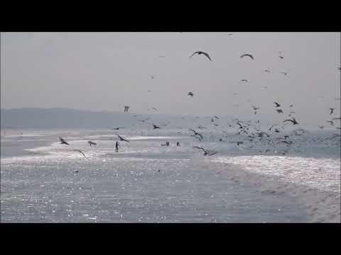 Coastline - Adriatic sea (Dj Milews rmx)
