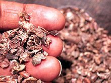 Research Innova Cocoa Chocolate: MINA de oro, con mas de 700 COMPUESTOS