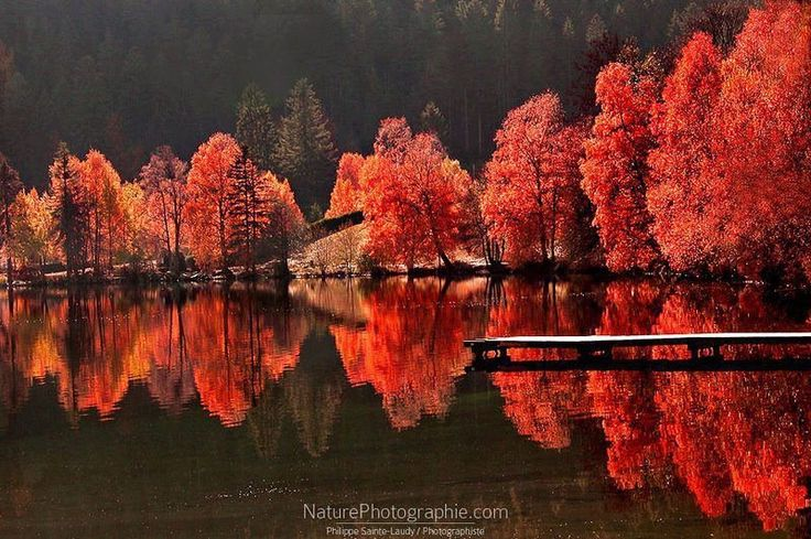 Arvores vermelhas refletidasRed, Favorite Places, Nature, Fall Colors, Autumn, Beautiful, Fall Trees, Landscapes Photography, Philippe Saintelaudi