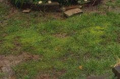 moss in shade grass