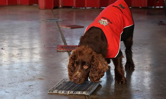 Reggie the cocker spaniel helping sniff out arson