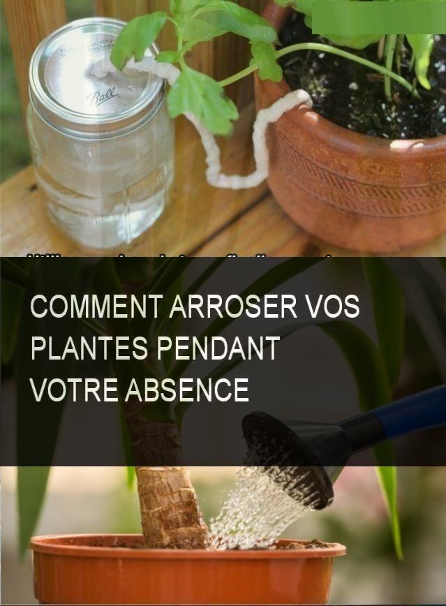 Comment Arroser Vos Plantes Pendant Votre Absence Plante Astuce