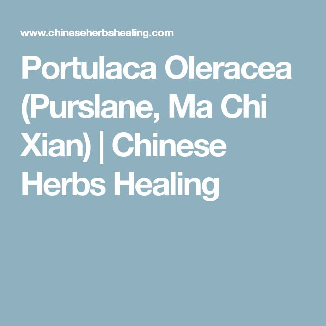 Portulaca Oleracea (Purslane, Ma Chi Xian) | Chinese Herbs Healing