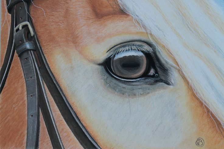 Drawing of Haflinger's eye with pastel pencil