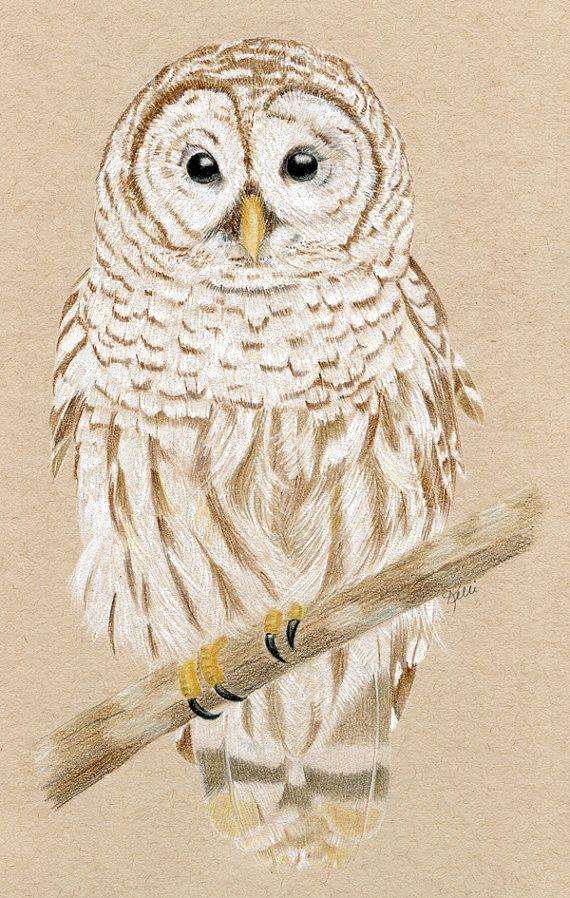 Barred Owl  Original Colored Pencil Drawing  by KelliMcNicholsArt