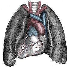 Situs inversus (also called situs transversus or oppositus) is a congenital condition in which the major visceral organs are reversed or mirrored from their normal positions.