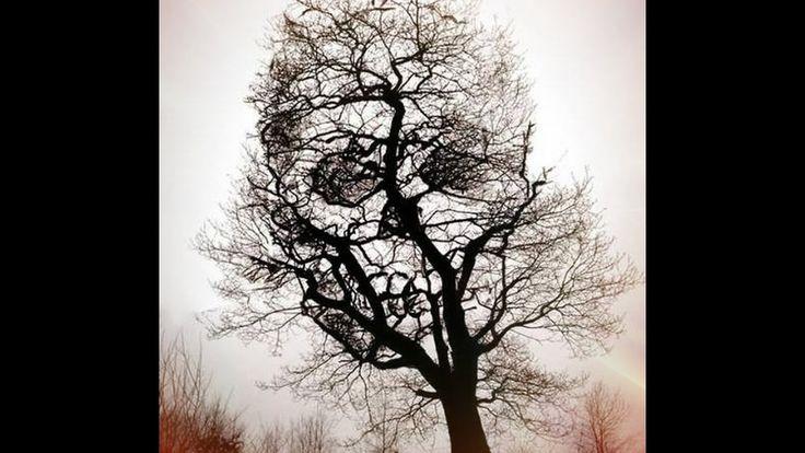 Árboles devoradores de humanos