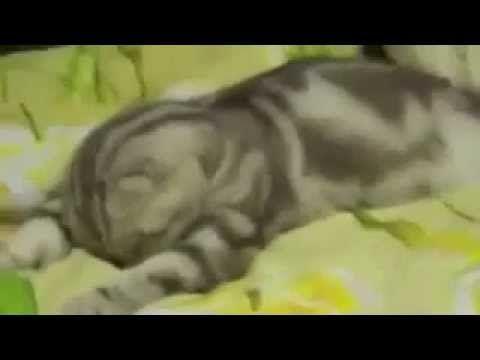 Кот Уснул! - YouTube  смотри ещё другие видео