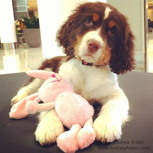Chew on This! Teach Your Dog to Have a Chew Toy Habit ☺  ✿