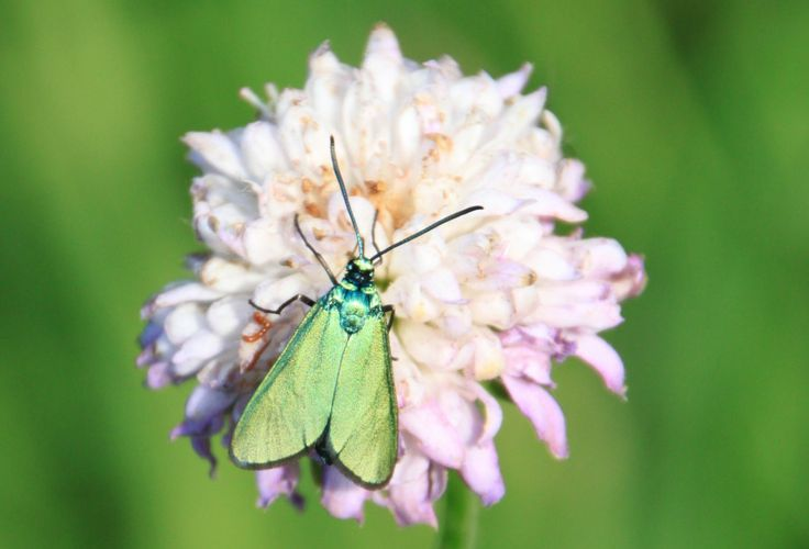 Metallic green butterfly wings, Public Domain Photos, Free Images for Commercial Use