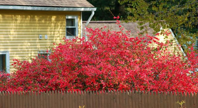 What Is Root Pruning and How Can It Help My Old Shrubs?