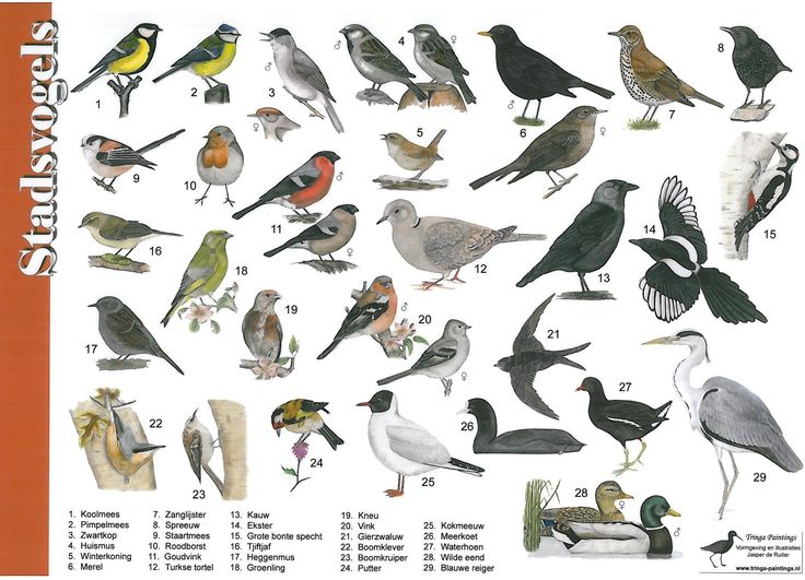 Zoekkaart stadsvogels