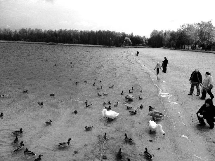 #swan #lake