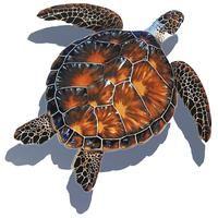 Brown Turtle w/Shadow - Pool Mosaic