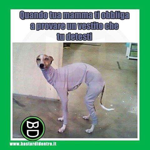 Quando ti obbligano a provare qualcosa che non vuoi  Seguici su youtube/bastardidentro #bastardidentro #vestito #cane www.bastardidentro.it