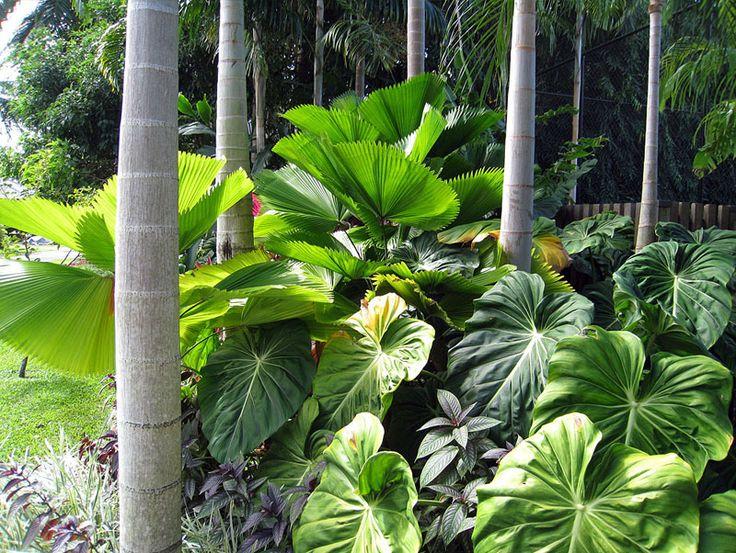 tropical planting design Google Search Tropical Garden