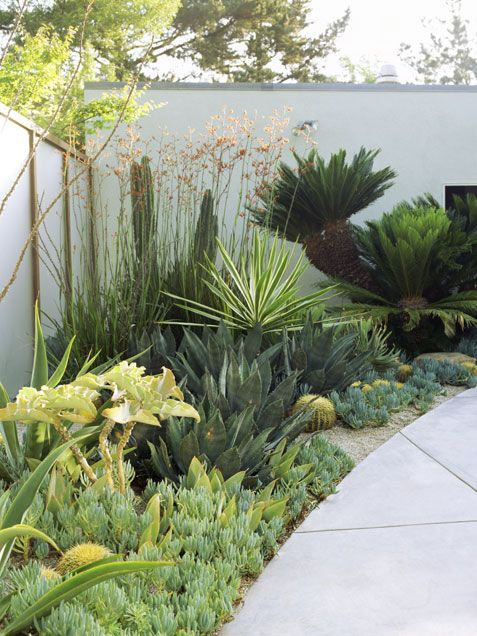 This combination of plants won't overwinter in Colorado, but consider the textures and shapes in the leaves-- hardy agaves, yuccas, joshua trees, sedums, and sempervivums would make a spectacular low-water garden.