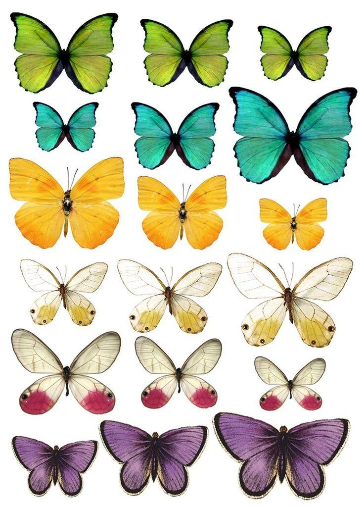 Картинки бабочек печать