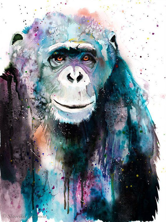 Chimp Chimpanzee Watercolor Painting Print By Slaveika Aladjova
