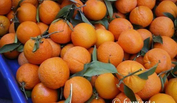 Πορτοκάλια Μέρλιν χυμού Νο 5-6 χυμού χύμα Oranges Merlin for juice http://www.creta-supplies.gr/en/products.php?p=8