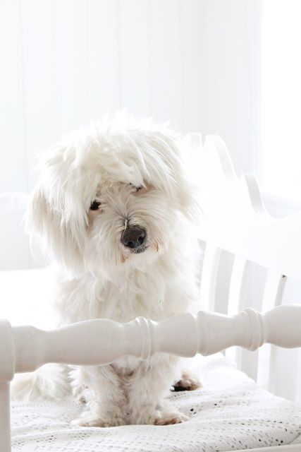 cottage puppy | Vibeke design