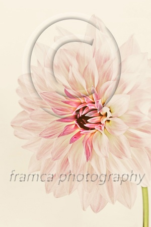 Scerene  framcaphotography.com