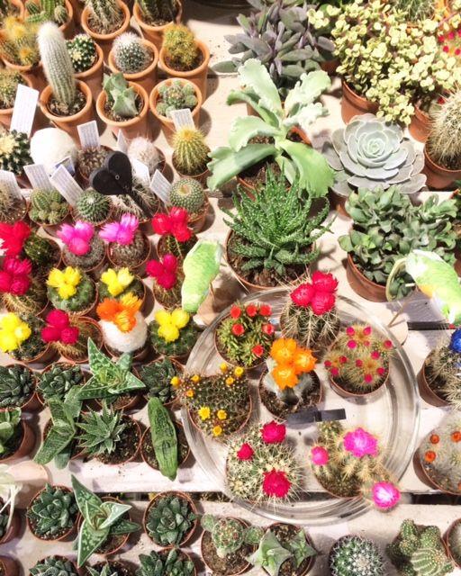 We hebben weer heel veel super leuke, blije plantjes en cactussen binnen!