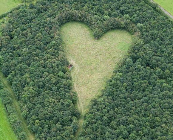Heart Shaped Meadow au Royaume-Uni. C'est encore une fois un agriculteur qui a créé cette prairie en forme de coeur en hommage à sa femme au milieu d'une forêt de chênes.