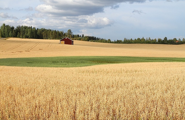 Finland farm, somewhere between Jämsä and Kuhmoinen