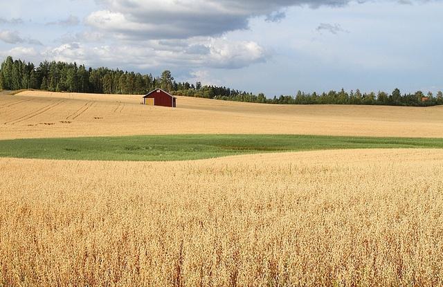 Finland farm, somewhere between Jämsä and Kuhmoinen