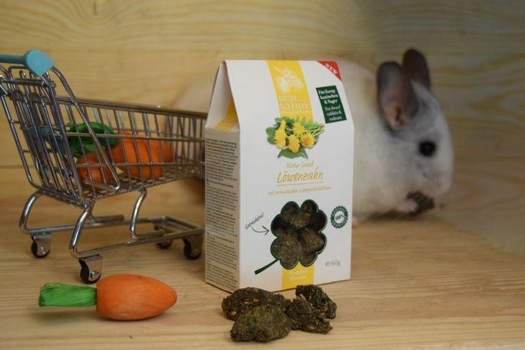 Real Nature - mniszek lekarski - przysmak dla szynszyli. Natural snacks for chinchillas #maxizoo #szynszyle #chinchillas