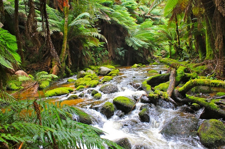 Creek St Columba Falls - prints and downloads available