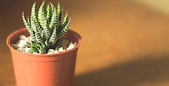 ¿Te gustan los cactus? Alerta, según el Feng Shui deberías tener cuidado con dónde los colocas