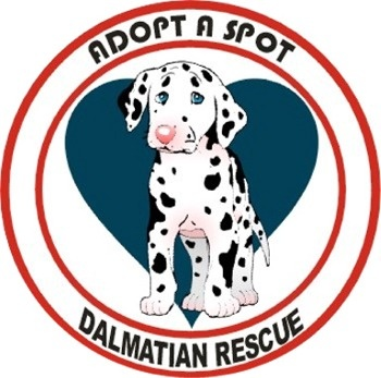 Love Dalmatian rescue!! Got my little angel from them :)