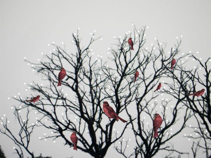 birds in a tree by Brianna Buza