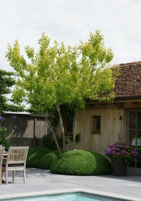 Pin van bregt roobroeck op tuin pinterest deuren en tuin - Aangelegde tuin ideeen ...