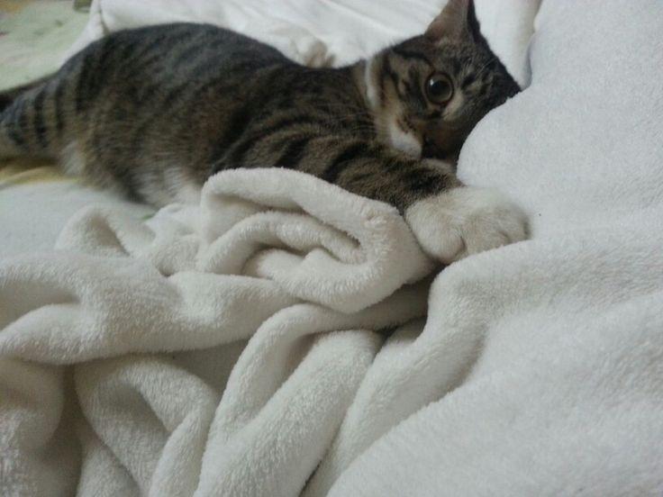 Cute little cat :)
