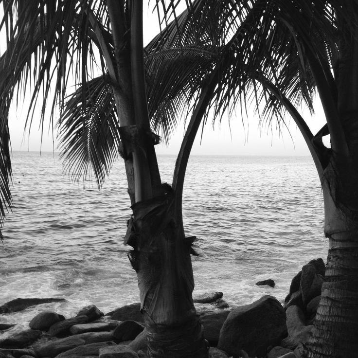 #palm tree