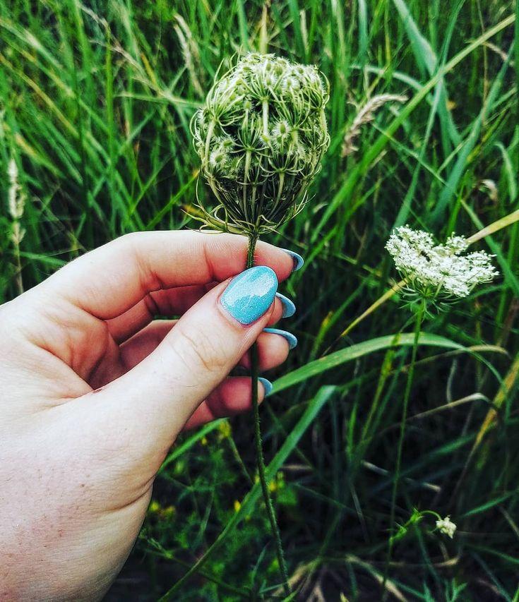 Natürliches Lila ♥ ️. . . . . #Natur #Natur #Naturfotografie #Fotografie #Landschaft