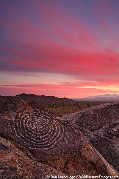 Sunset in Saguaro National Park, Tucson Mountain District, Saguaro West, Tucson, Arizona, USA