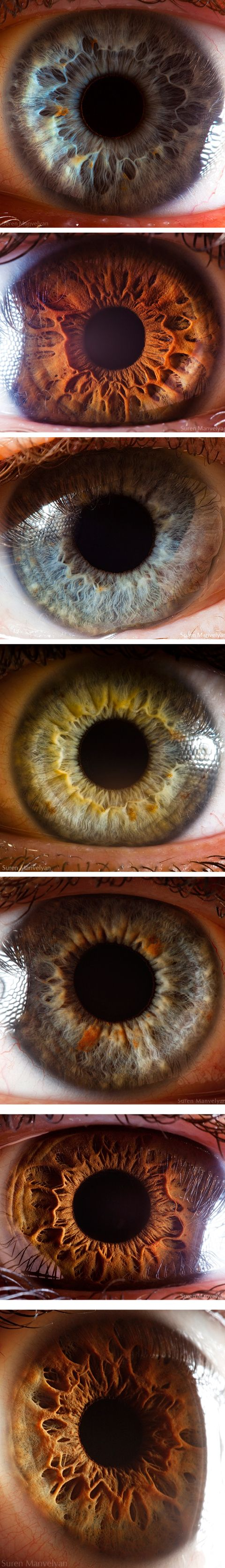 Close up photography of the human eye.