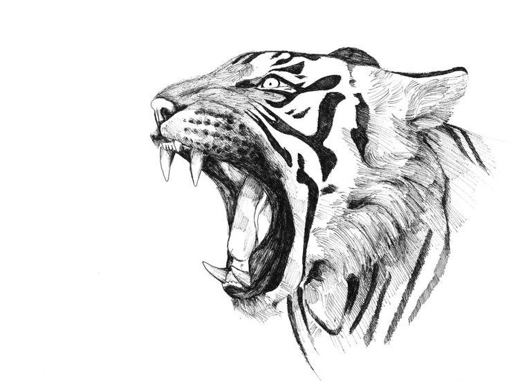 Tigre Sketch: Best 25+ Tiger Drawing Ideas On Pinterest