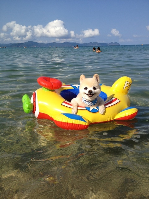 This little guy is all ready to enjoy the warm weather -- got the ocean & the perfect floatie!!